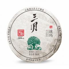2019年福元昌 三月系列 拔玛小饼(头春正山纯料)春茶 生茶 100克/饼 单片